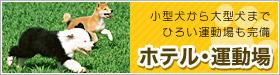 ペットホテル・運動場 小型犬かあ大型犬まで広い運動場も完備。